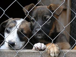 В Прикамье начнут открываться новые приюты для безнадзорных собак