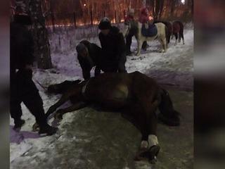 В Березниках на глазах у прохожих умирала лошадь