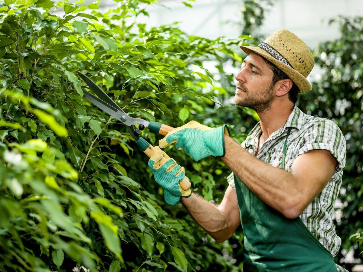 Тест: Какой из вас садовник?