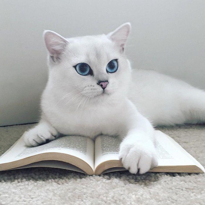Тест: Кто ваш кот в прошлой жизни?