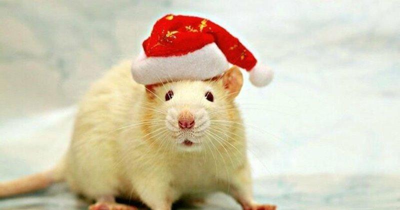 5 советов, как удачно встретить Новый год Металлической крысы 2020